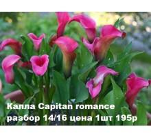 Калла Capitan romance разбор 14/16