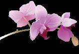 Цветочный калейдоскоп Юга